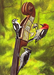 Hocker woodpecker card2