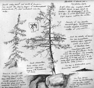 Shore-spruce-sketch-page-k-hocker
