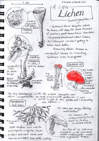 Lichen-sketch-page