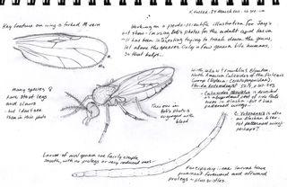 Noseeum-sketch-page