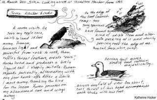 Sitka-bird-sketch