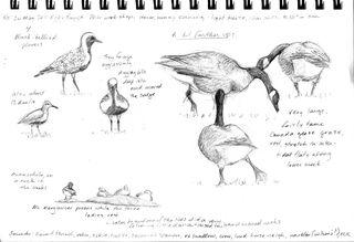 Hocker-cowee-sketch