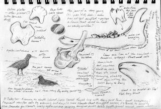 Hocker-kayak-trip-sketch-