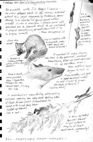 Hocker-marten-sketch