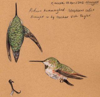 Wrangell-hbird-hocker