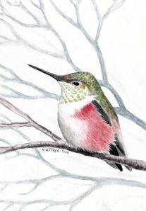 hocker-hummingbird-sketch
