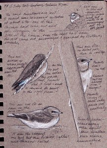 hocker-swallow-sketches