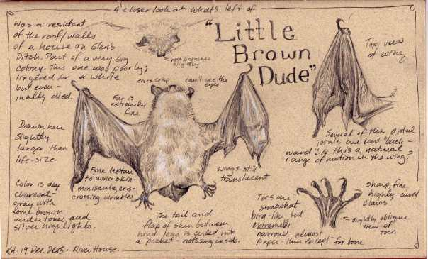 kh-little-brown-dude