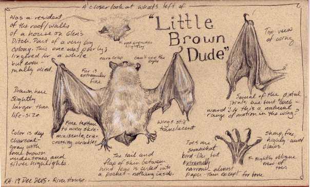 kh-little-brown-dude