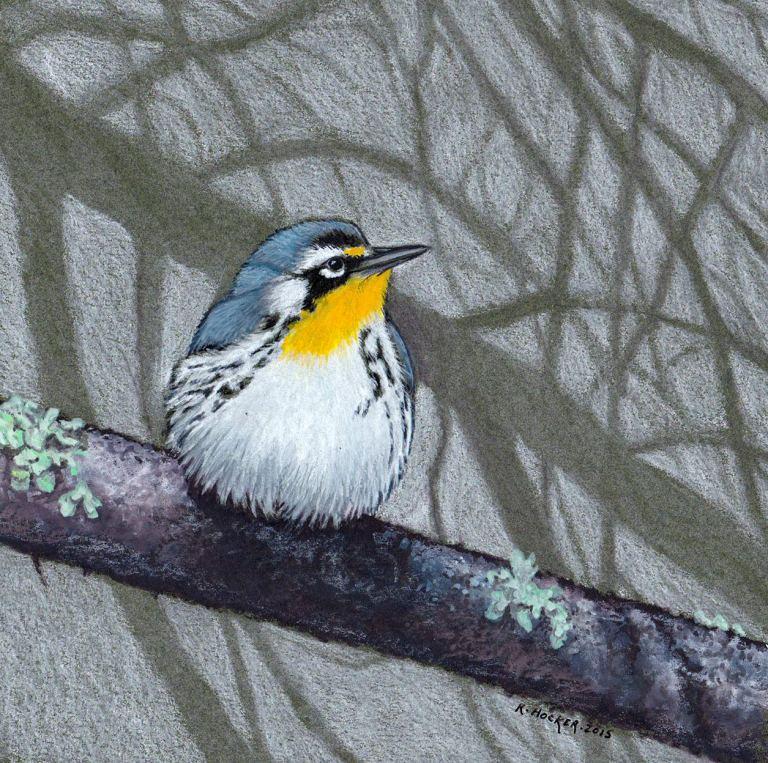 hocker-YT-warbler