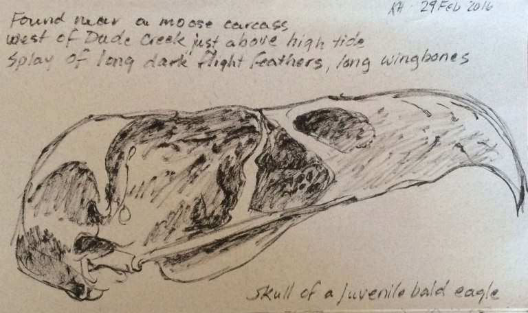 hocker-eagle-skull