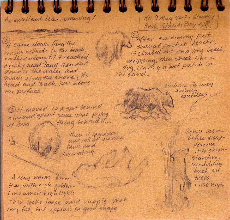 hocker-bear-viewing-sketch-kh